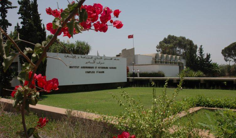 Institut Agronomique et Vétérinaire IAV CHA Agadir